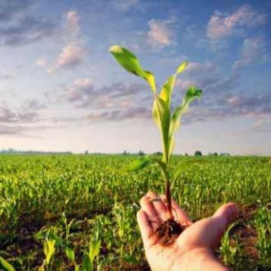 """Coldiretti: """"L'agricoltura italiana è la più green d'Europa"""""""