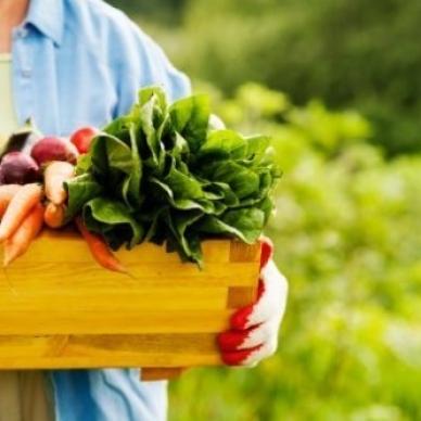 Testo unico sull'agricoltura biologica, via  libera del Senato