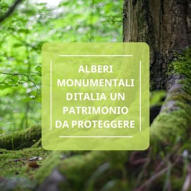 ALBERI MONUMENTALI D'ITALIA, UN PATRIMONIO DA PROTEGGERE